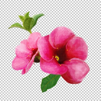 Różowe kwiaty akwarela