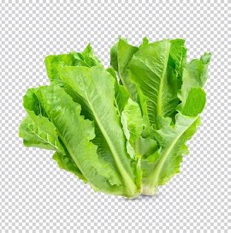 Świeża sałata izolowana premium psd