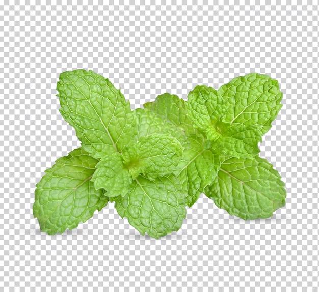 Świeże liście mięty na białym tle.
