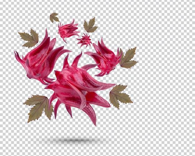 Świeże owoce roselle na białym tle