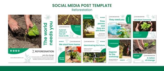 Szablon postu w mediach społecznościowych na ponowne zalesianie