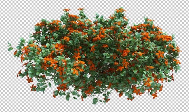 Szczotkuj drzewo kwiatami
