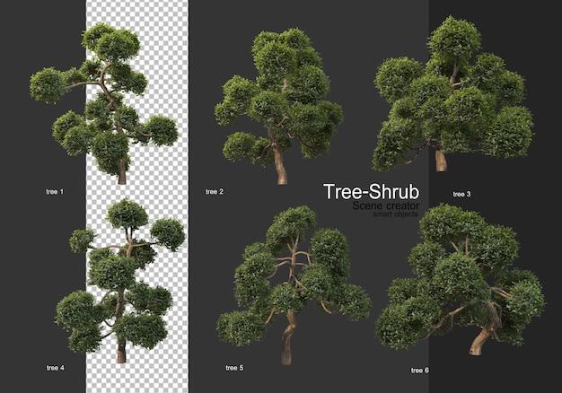 Szeroka gama drzew i krzewów