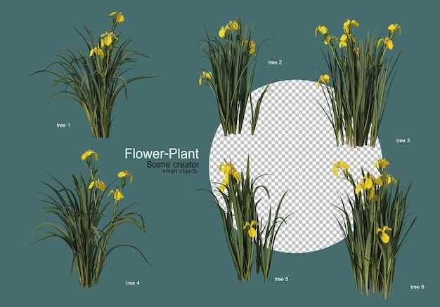 Szeroka gama kwiatów i roślin o różnych kształtach
