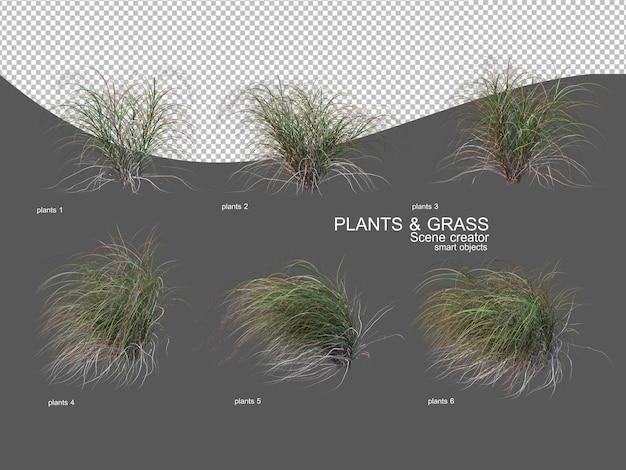 Trawy o różnych rozmiarach i typach