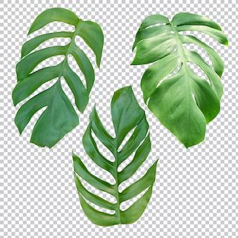 Tropikalna roślina na przezroczystym