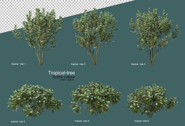 Tropikalne drzewa i kwiaty