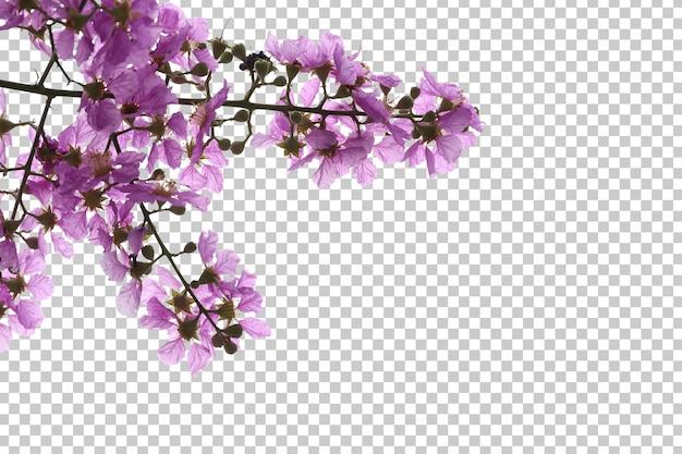 Tropikalne drzewo kwiaty i gałąź pierwszego planu na białym tle