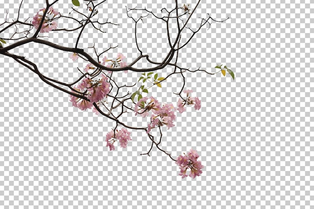 Tropikalne drzewo kwiaty liście i gałąź pierwszego planu na białym tle