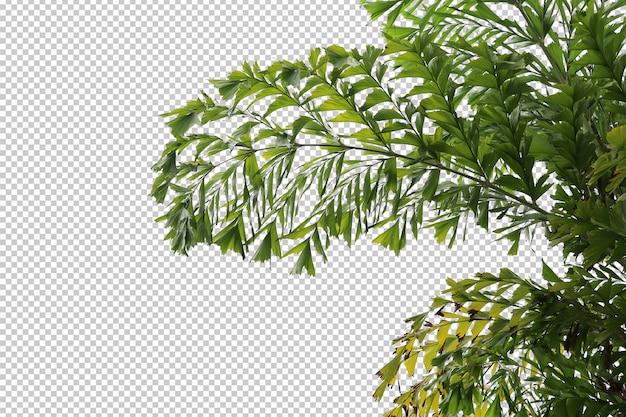 Tropikalne drzewo liście i gałąź na białym tle