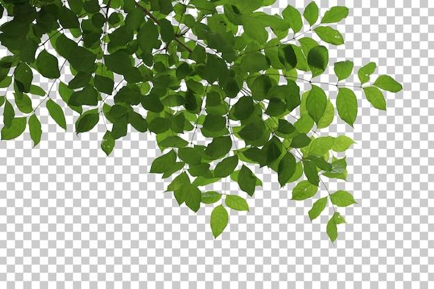 Tropikalne liście drzew i pierwszy plan gałęzi na białym tle