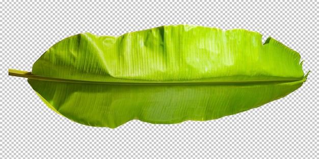 Tropikalny liść liścia bananowca na białym tle