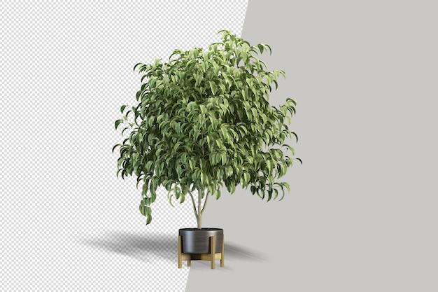 Widok izometryczny 3d roślin