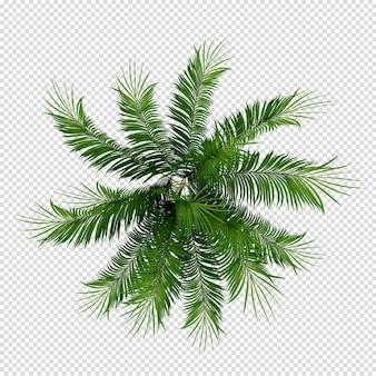 Widok z góry roślin w renderowaniu 3d na białym tle