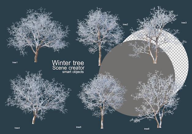 Wiele rodzajów drzew zimą
