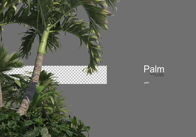 Wiele rodzajów palm