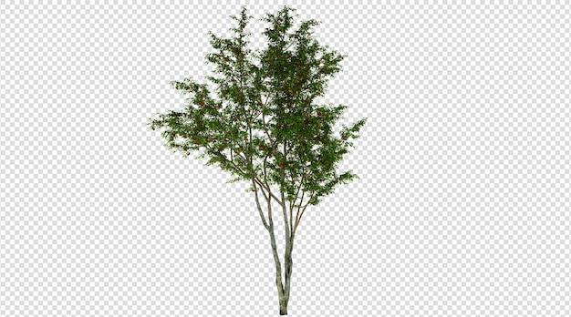 Wiśniowe drzewo białe tło renderowania 3d