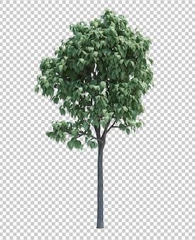 Wspaniałe szczegółowe drzewo na białym tle