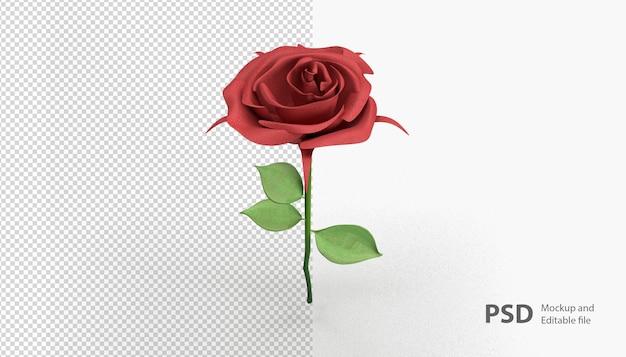 Zbliżenie na różę na białym tle