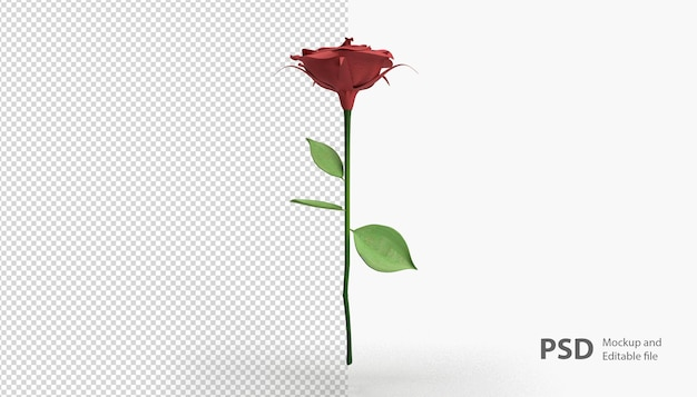 Zbliżenie Na Różę Na Białym Tle Premium Psd