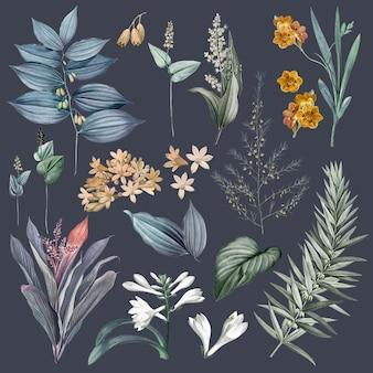 Zestaw kwiatów i ilustracji roślin