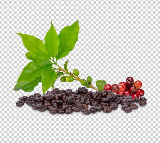 Ziarna kawy z liśćmi izolowanymi premium psd
