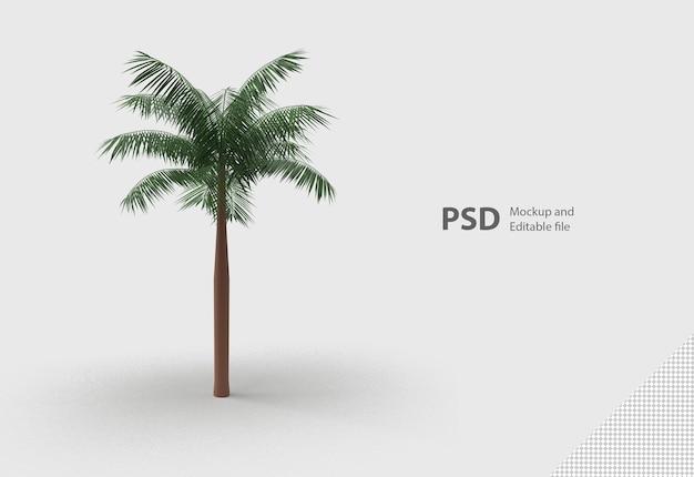 Zielona palma na białym tle