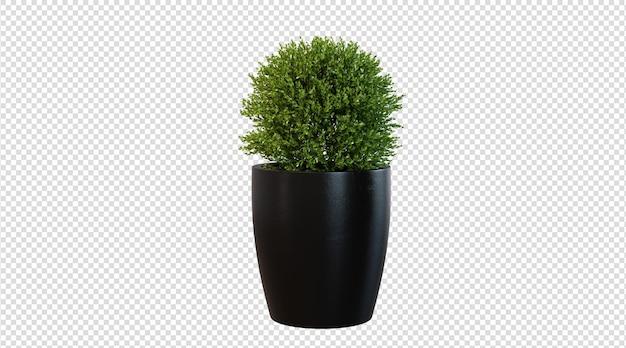 Zielona roślina na białym tle