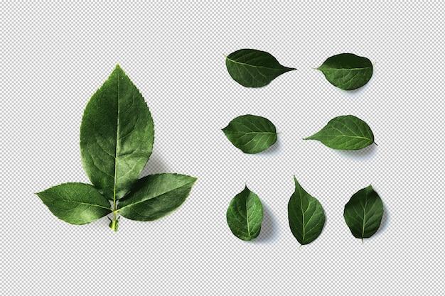 Zielone liście na białym tle