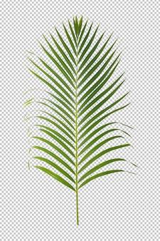 Zielonego liścia ornamentacyjna roślina odizolowywająca