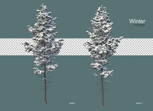 Zimą sosny różnej wielkości