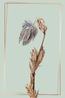 Złota ramka z suszonym niebieskim kwiatem ostu na zielonym tle