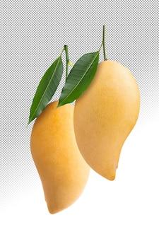 Żółte mango na białym tle