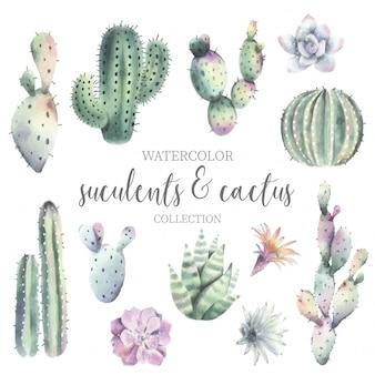 Ładny kaktus akwarela i kolekcję sukulentów