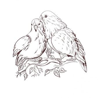 14 lutego, gołębie symbol miłości na białym tle para na gałęzi.