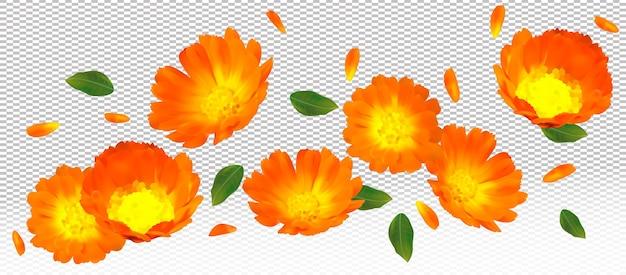 3d realistyczny kwiat nagietka z zielonym liściem. żółty kwiat nagietka