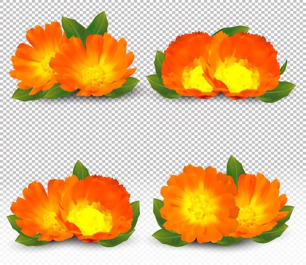3d realistyczny nagietek. pachnący kwiat nagietka z bliska.