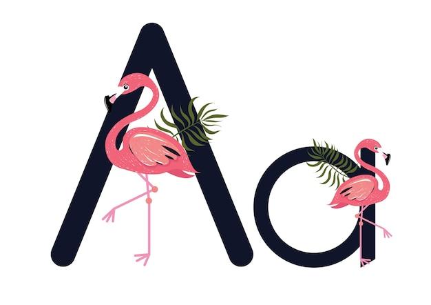 Aa flamingos