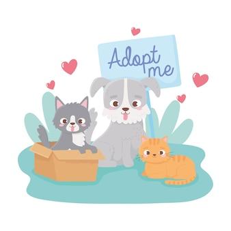Adoptuj zwierzaka, kota w pudełku, małego psa i kotka na ilustracji trawy