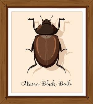 Afrykański czarny chrząszcz w drewnianej ramie