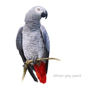 Afrykański szary parrot szczegółowo malowany