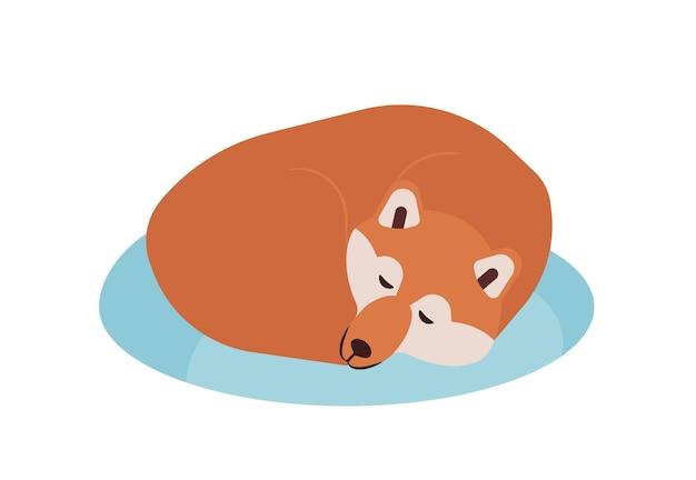 Akita inu. śliczny rasowy japoński pies towarzyszący śpi lub drzemki na białym tle. urocze zwierzę domowe lub zwierzę domowe. ilustracja wektorowa kolorowe w stylu cartoon płaskie.