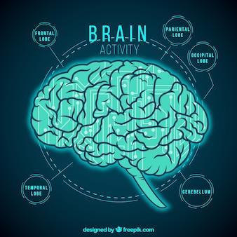 Aktywność mózgu infografika