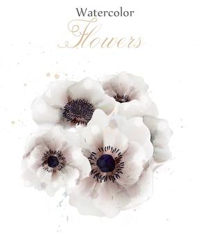Akwarela białe kwiaty maku