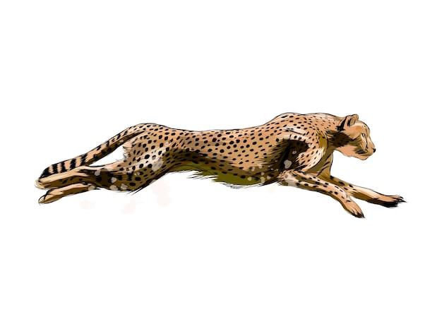 Akwarela cheetah na białym tle