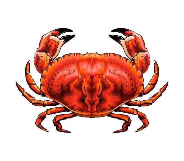 Akwarela czerwony krab na białym tle