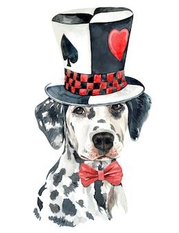 Akwarela dalmatyński pies z magicznym kapeluszem