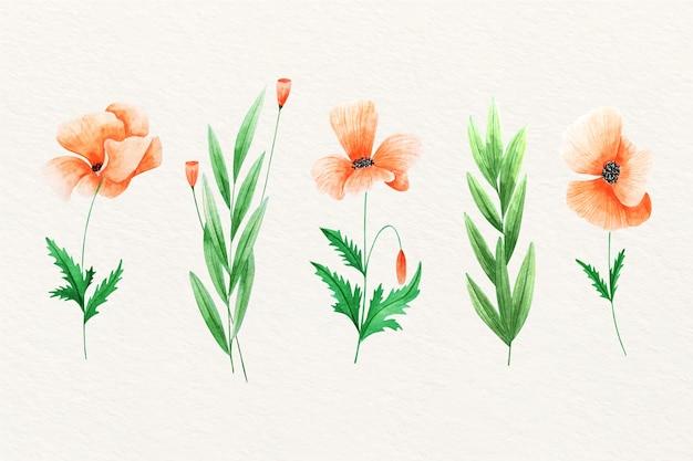 Akwarela dzikich kwiatów tulipanów otwarte