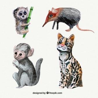 Akwarela dzikie zwierzęta i piękne małpy