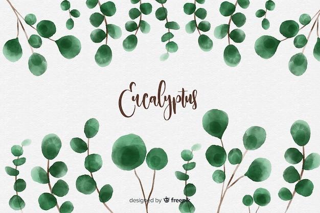 Akwarela eukaliptus pozostawia tło